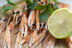 Scampi Stock Image