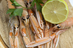 Scampi Stock Images