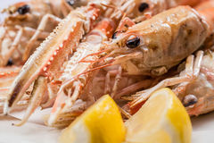 Scampi Royalty Free Stock Image