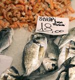 Scampi and gilthead bream for sale in the market Royalty Free Stock Photos