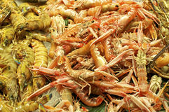Scampi on the Market in Barcelona Stock Images