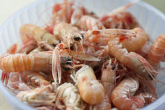 Scampi in the pot Stock Image