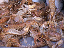 Scampi or prawns on sale at  Kalloni Lesvos Greece Royalty Free Stock Images
