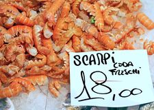 Scampi for sale in the italian fish market Stock Photography