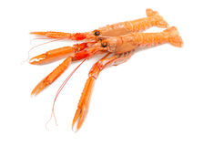 Scampi Stock Photography