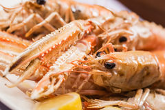 Scampies and prawns. Stock Photography