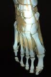 scan obrazu stopy Fotografia Royalty Free