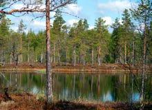 Scandinavan wetland Stock Photos