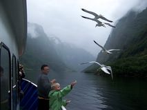 Scandinavian boy feeding seagulls from a cruise ship royalty free stock photo
