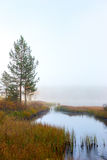 Scandinavian foggy wetland Royalty Free Stock Image