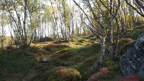 Scandinavian forest. A beautiful and pure autumn nature in Scandinavia Stock Image