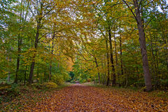 Scandinavian forest in the fall Stock Photo