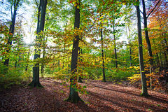 Scandinavian forest in fall sunlight Royalty Free Stock Image