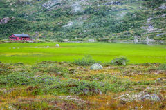 Scandinavian landscape with field Stock Photos