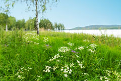 Scandinavian landscape Stock Images