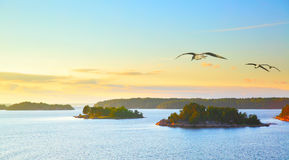 Scandinavian landscape with sea gulls Stock Image