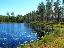 Scandinavian Summer landscape. Beautiful Scandinavian summer landscape with lake in Sweden Stock Photography