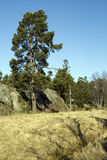 Scandinavian vegetation Royalty Free Stock Photography