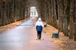 Scandinavian walking man on alley in park and trees.  Royalty Free Stock Photography