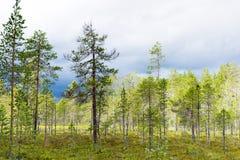 Scandinavian wetland Stock Photo
