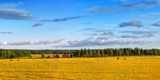 Scandinavian wheat landscape Stock Photos