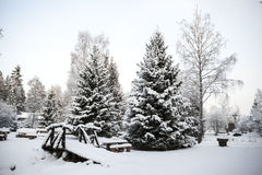 Scandinavian winter forest on the banks of the river in the snow at sunset frosty day. stock photography