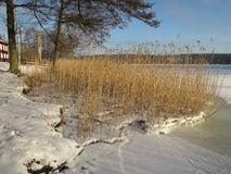 Scandinavian winter landscape. Winter landscape with the shore of a frozen lake Stock Photos