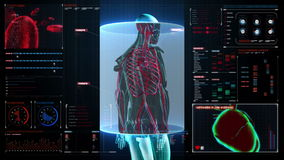 Scanning blood vessel in male body in digital display dashboard. X-ray view