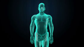 Scanning body. Rotating Human lungs, Pulmonary Diagnostics, Blue X-ray light.