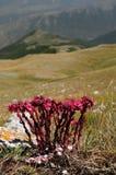 Scanno av berg, Abruzzo Royaltyfri Foto