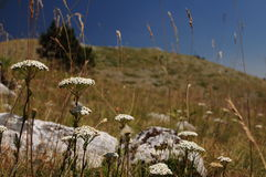 Scanno av berg, Abruzzo Arkivbild