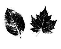 Scanography, комплект clipart листьев стиля силуэта Стоковые Изображения RF