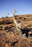 Scant vegetation king Canyon Northern Territory Australia Stock Photo