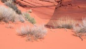 Scanty vegetation of a sand desert Stock Photography