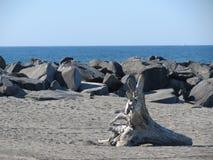 海滩scape 库存照片