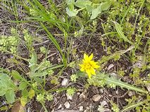 Scape amarillo a de la tierra de la naturaleza de la flor salvaje fotos de archivo