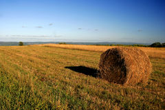 Scape da terra de exploração agrícola do Cayuga fotos de stock