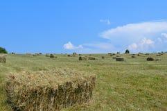 Scape da terra de exploração agrícola do Cayuga Foto de Stock