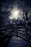 Scape de la noche Foto de archivo libre de regalías