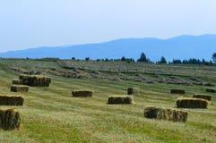 Scape de la pista de granja del Cayuga Fotos de archivo libres de regalías