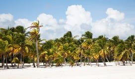 Scape de la playa del cana del casquillo Imágenes de archivo libres de regalías