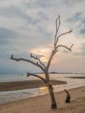Scape del mar y árbol muerto Fotos de archivo libres de regalías