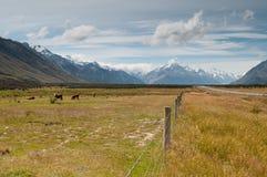 Scape della montagna del cuoco di Mt., Nuova Zelanda Fotografia Stock