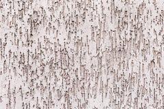 Scarabée d'écorce de plâtre de texture images libres de droits