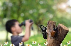 Scarabée de rhinocéros au-dessus de garçon d'ONU-foyer avec binoculaire Photos stock