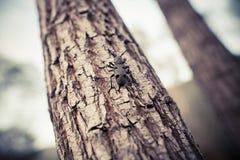 Scarabée de tisserand sur un arbre photographie stock