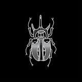 Scarabée de vecteur Insecte admirablement ornated Photo libre de droits