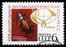 Scarabée moulu (schoenherri de Carabus), emblème du 13ème congrès d'entomologie, serie international des congrès, vers 1968 images libres de droits