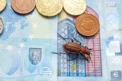 Scarab?e moulu sur le billet de billet de 20 euros ? c?t? d'une petite pi?ce de la Bosnie-Herz?govine photos stock