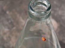 Scarabée sur une bouteille, coccinelle de points de polka Photos libres de droits